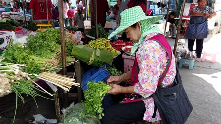 batatas : Chiang Saen, Thailand - 2019-03-10 - Woman Trim Parsley Bunch at Market. Stock Footage