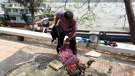 kaczka : Chiang Saen, Thailand - 2019-03-10 - Man Packs Live Ducks He Just Sold at Market.