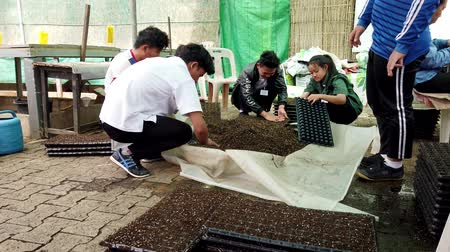 doldurmak : Mae Saiong. Thailand - 2019-03-11 - Volunteers Fill Greenhouse Flower Beds With Peat - Low. Stok Video