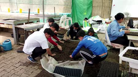 торф : Mae Saiong. Thailand - 2019-03-11 - Volunteers Fill Greenhouse Flower Beds With Peat. Стоковые видеозаписи