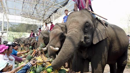ziyafet : Chiang Rae, Thailand - 2019-03-13 - Elephant Feast Festival - People Feed Row of Elephants Bananas and Sugar Cane.