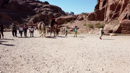 the bedouin : Petra, Jordan - 2019-04-23 - Camels Pass Donkeys in Petra.