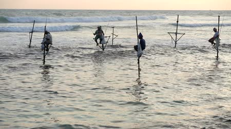 fisherman : Galle, Sri Lanka - 2019-04-01 - Stilt Fishermen - Four Twitching Their Poles. Stock Footage