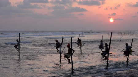 fisherman : Galle, Sri Lanka - 2019-04-01 - Stilt Fishermen - Seven at Sundown.