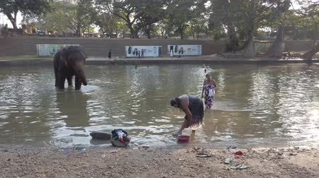 fürdés : Kataragama, Sri Lanka - 2019-03-29 - Elephant Stands in River While People Bath Nearby 3.