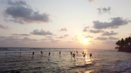 fisherman : Galle, Sri Lanka - 2019-04-01 - Stilt Fishermen - Ten Men at Sunset. Stock Footage