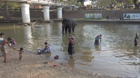 fürdés : Kataragama, Sri Lanka - 2019-03-29 - Elephant Stands in River While People Bath Nearby 1.