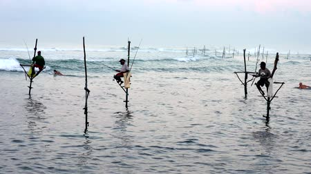 fisherman : Galle, Sri Lanka - 2019-04-01 - Stilt Fishermen - Surfer Swims Out Past Fishermen.