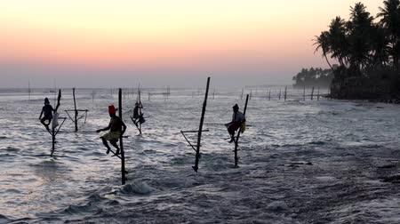 bennszülött : Galle, Sri Lanka - 2019-04-01 - Stilt Fishermen - Four Near Shore at Sundown.