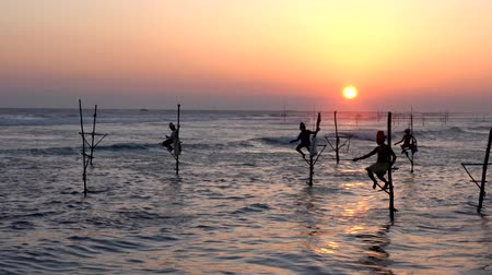 шри : Galle, Sri Lanka - 2019-04-01 - Stilt Fishermen - Four Men on Stilts. Стоковые видеозаписи