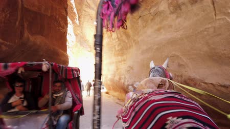cavalo vapor : Petra, Jordan - 2019-04-23 - View From Horse Carriage Riding Through Siq Towards Treasury.