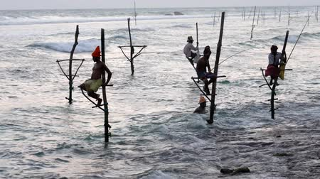 fisherman : Galle, Sri Lanka - 2019-04-01 - Stilt Fishermen - One Swims in at End of Day.