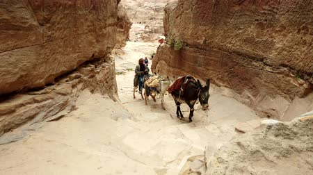 jordanie : Petra, Jordan - 2019-04-23 - Mule Driver Brings Mules Up Canyon To Monestary. Stockvideo
