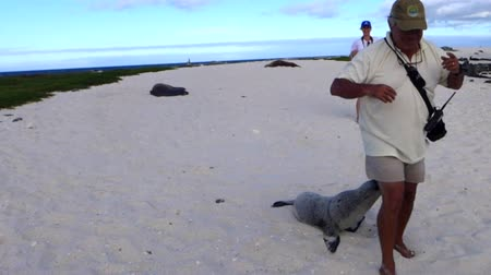 curioso : Galapagos, Cile - 2019-06-29 - Baby Lion Sea Cuddles Up To Galapagos Guide.