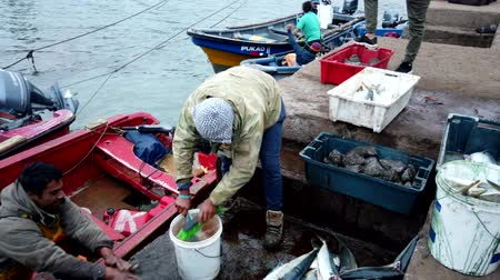 fisherman : Fisherman Cleans Freshly Caught Fish With Brush. Stock Footage
