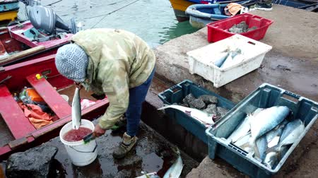 Fisherman Transfers Freshly Caught and Cleaned Fish To A Second Bin.