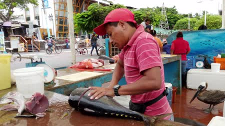 エクアドル : Galapagos, Ecuador - 2019-06-20 - Fish Seller Cuts Steak From Dorado.