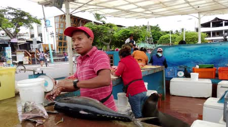 Galapagos, Ecuador - 2019-06-20 - Fish Seller Trims Dorado and Removes Steak.