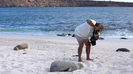 Galapagos, Ecuador - 2019-06-20 - Guide takes photograph of sand covered baby sea lion.