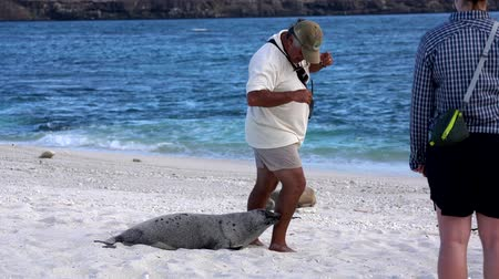 lions : Galapagos, Équateur - 2019-06-20 - Baby Sea Lion Chases Guide.