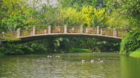 River in the park and lush green trees with old bridges.