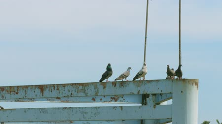 The pigeon island and play on the iron pillar of the pontoon waiting for the boat across.