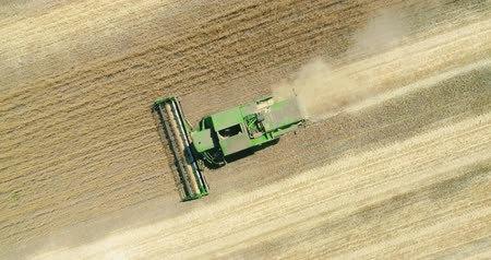 Modern combine harvester working on the wheat crop. Aerial view. Dostupné videozáznamy