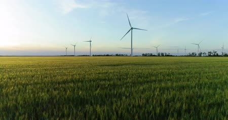 planta : Group of windmills for electric power production in the green field of wheat
