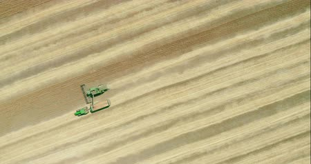 Combine harvester transferring freshly harvested wheat to tractor trailer for transport. Aerial view.