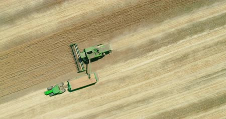 enchimento : Combine harvester transferring freshly harvested wheat to tractor trailer for transport. Aerial view.