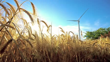 Windmill for electric power production in the yellow field of wheat Stok Video