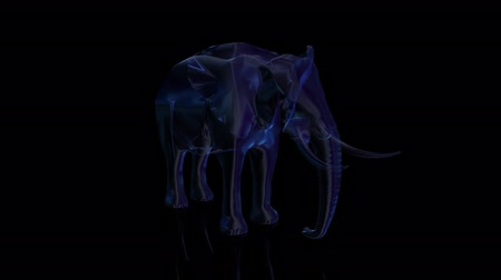 african elephant : Elephant from low poly wireframe on dark background. polygonal video consisting of points, lines, and shapes. Seamless looping motion animated in virtual space. Stock Footage