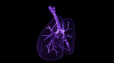 alerji : Rotating 360 degree of human lungs. Glowing blue light particles point of human lungs model. Seamless looping motion animated neurons in 3d virtual space.