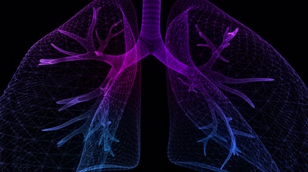 fyziologie : Human lungs. Blue light dot and lines formation human lungs model. Motion animated neurons in 3d virtual space.