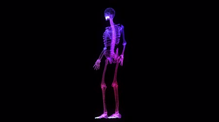 keringés : Human skeleton 3D rendering wire-frame on dark background.- rotating seamless loop.