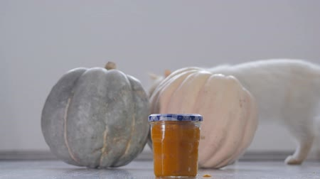 baked pumpkin : Homemade pumpkin puree made of baked organic pumpkin. Cat walking on the background. Stock Footage