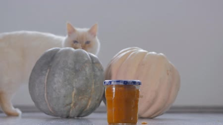 küçük hindistan cevizi : Homemade pumpkin puree made of baked organic pumpkin. Cat walking on the background. Stok Video