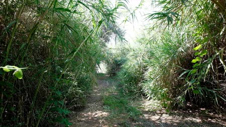 nemli : Slow walk through bushy path, glide shot, exotic plants around. First person view, clear ground pathway.