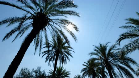 álmodozás : Sun rays seen through the palm leaves. Camera moving foreward on the palm trees street Stock mozgókép