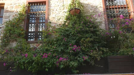 sundurma : bougainvillea growing near the the old mediterranean house Stok Video