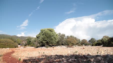 A lot of antique stones on the field and olive trees on background. Wind shakes trees, clouds moving on the sky. Stock mozgókép