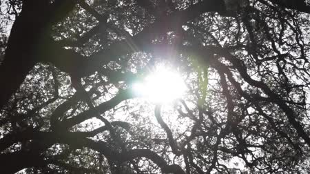 Sunlights shining through the branches of a large tree in the forest