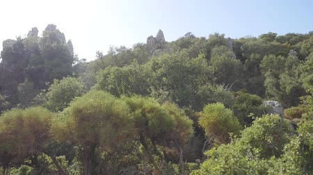 View of olive forest with ruins of ancient castleon background. Wind shakes trees. Stock mozgókép