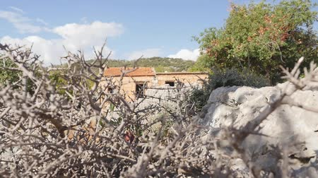 taş işçiliği : through the prickly bush you cant see old house built on the ruins of a ancient castle. Castle was crashed during earhquake hunder years ago