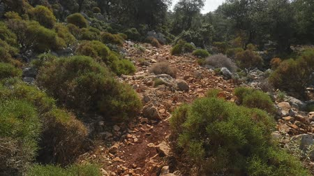 Walkway along the road strewn with small stones in forest. View from the first side.