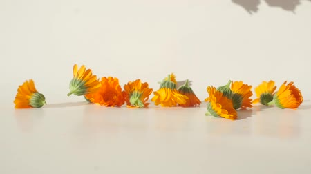 homeopathic : Closeup view of calendula heads falling on the table in slow motion