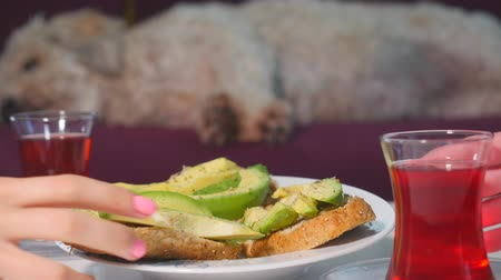 hibiscus tea : Womens hand take avocado sandwiches and drink tea. Fluffy dog on background