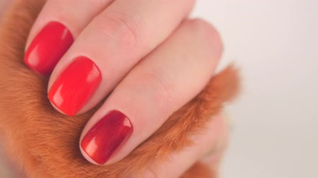 borgonha : Womans hands with red manicure red fluffy ball on white background, finger movements Stock Footage