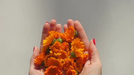 homeopathic : Womans hands hold and then throw calendula in slow motion