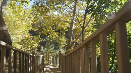 birch tree : Boardwalk through an autunm forest in sunshine weather. Camera moving in slow motion Stock Footage